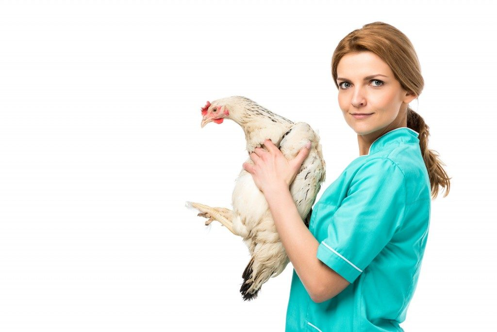woman in green scrub holding a white chicken